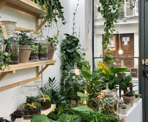 5 PLANTS THAT Improve the Air Quality in Your Space