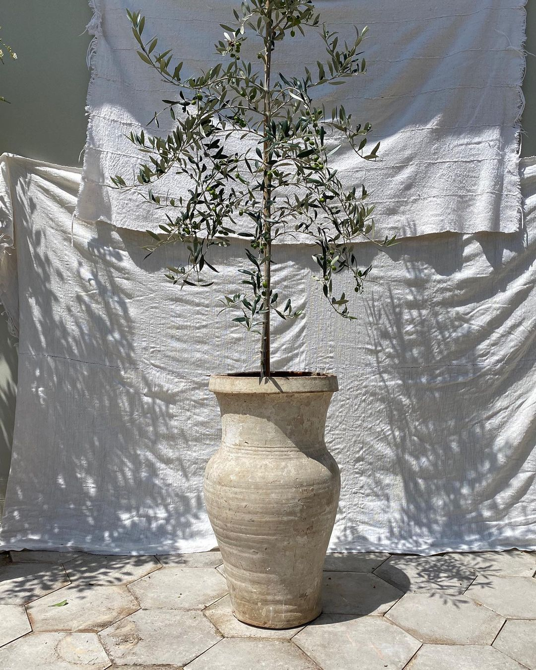 Olive Ateliers Pot (dm for price)